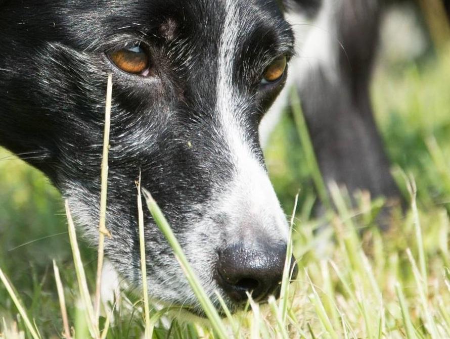 Il Cane Che Fa Il Cane La Ricerca Olfattiva Smiledog